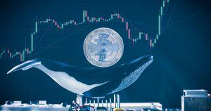 仮想通貨クジラには3つの種類がある|ビットコイン大量保有者の「市場への影響」を分析企業が考察