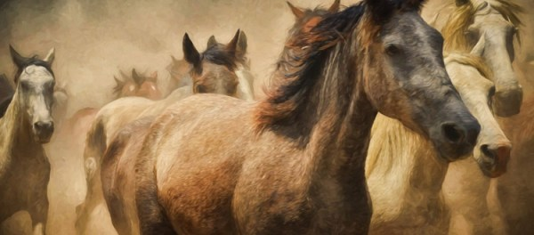 realistic horse breeds # 55