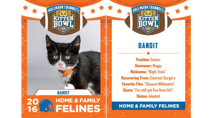 Bandit Home Amp Family Felines 2016