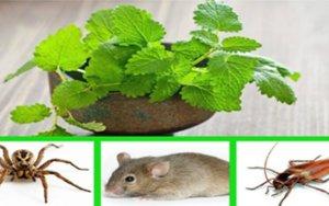 Como repelir insetos em casa sem usar tóxicos???