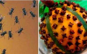 Moscas e mosquitos desaparecerão de sua casa: basta aplicar este inseticida caseiro!
