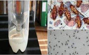 Testado, aprovado e recomendado! É o fim definitivo das baratas e formigas em casa!