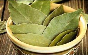 Com uma receita com esta folha, você vai combater tosse, insônia, pressão alta e ainda perder peso!