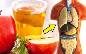 Os 13 Benefícios de Beber Vinagre de Maçã Todos os Dias
