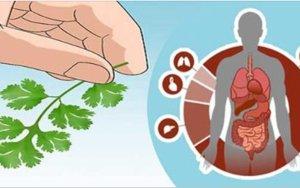 Esta receita é muito especial: trata e cura rins, pâncreas, fígado, ansiedade e também desintoxica o corpo e combate anemia!