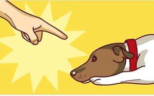 7 coisas que jamais você deveria fazer com seu cachorro e que provavelmente está fazendo