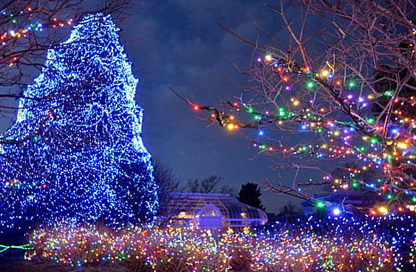 The 10 Most Amazing Christmas Trees In The US
