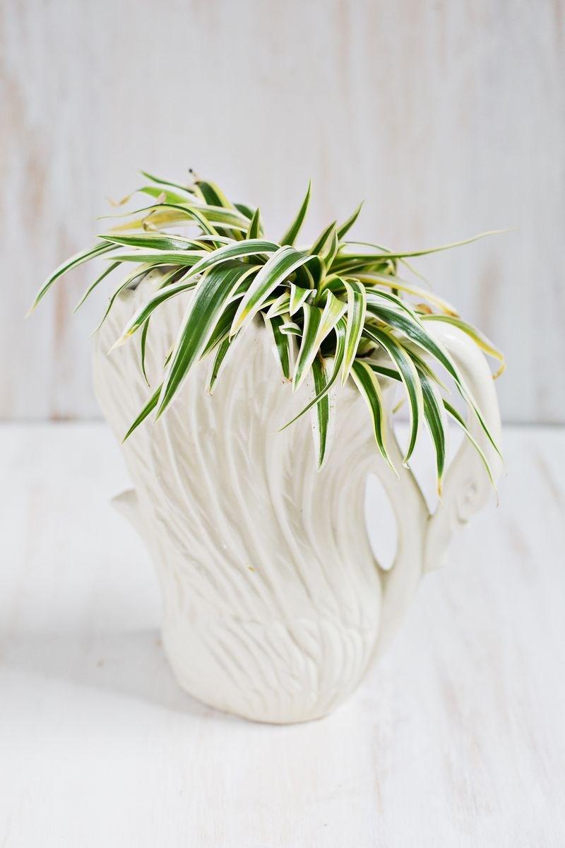 Tall Spiky Plants