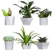 100 Concrete Succulent Planter Planters Archives