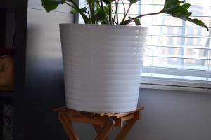 100 Planter Moves Into Indoor Gardening