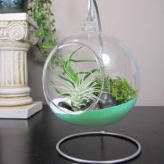 365 Designs Hanging Glass Terrariums Dipped Paint