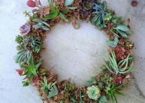 Adventuruss Succulent Wreath Diy