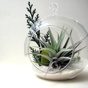 Air Plant Terrarium Globe Inspirational