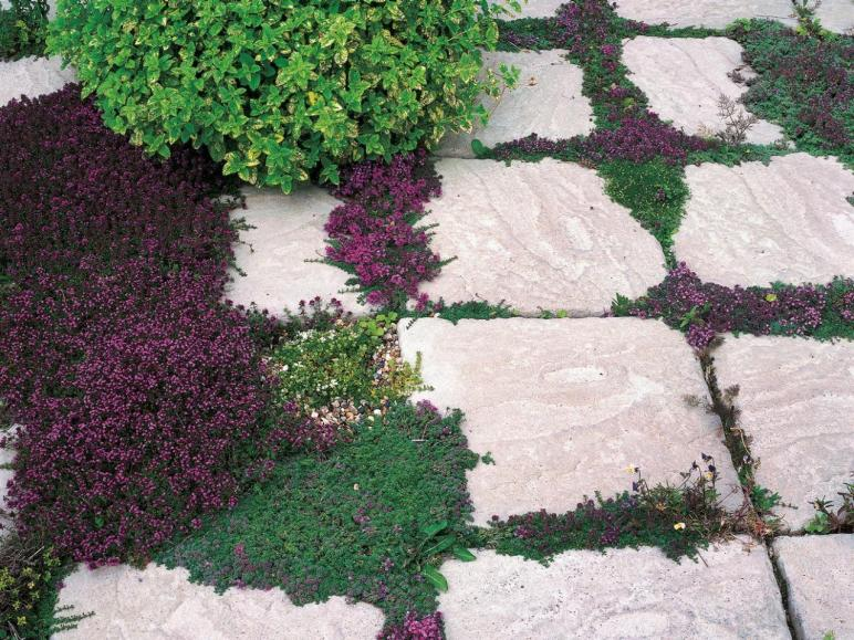 Alternatives Grass Landscaping Without