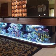 Aquarium Company Designs Service Supplies Aquariums