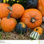 Autumn Outdoor Decor Vibrant Stock