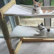 Awesome Diy Cat Furniture Ideas Family Handyman
