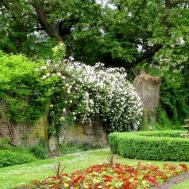 Beautiful Garden Awesome Plant Fence Idea