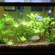 Beautiful Home Aquarium Design Interior