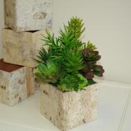 Birch Bark Vases Wood Boxes Succulent Planter Square Wedding