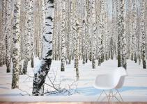 Birch Tree Wall Mural Winter