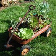 Botanical Junkie Creative Container Gardening