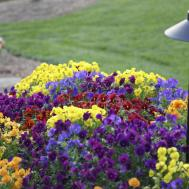 Choosing Annual Flowers Tips Growing Gardens
