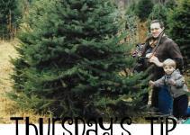 Choosing Perfect Christmas Tree Thursday Tip