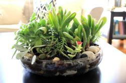 Cup Half Succulent Terrarium Diy