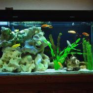 Decorating Your Fish Tank Beautiful Design Ideas