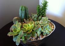 Design Dump Diy Succulent Arrangement
