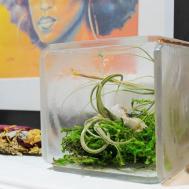 Diy Clear Resin Terrarium Tutorial Displaying Air Plants