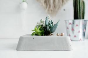 Diy Concrete Succulent Planter