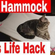 Diy Hammock Cats Inspiring Projects