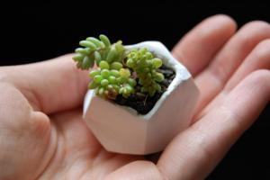 Diy Tiny Polymer Clay Plant Pots Pdx