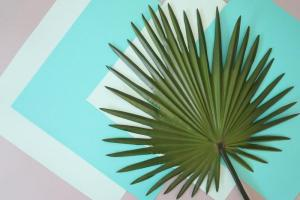 Diy Tropical Art Palm Leaves