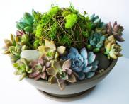 Diy Vibrant Succulent Planter Kelley Cricket