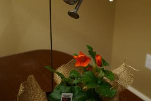 Easy Diy Burlap Plant Centerpieces Kristinpotpie