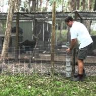 Easy Poor Man Dog Fox Proof Fencing Chicken Pen
