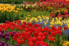Edging Design Ideas Designs Garden Flower Beds