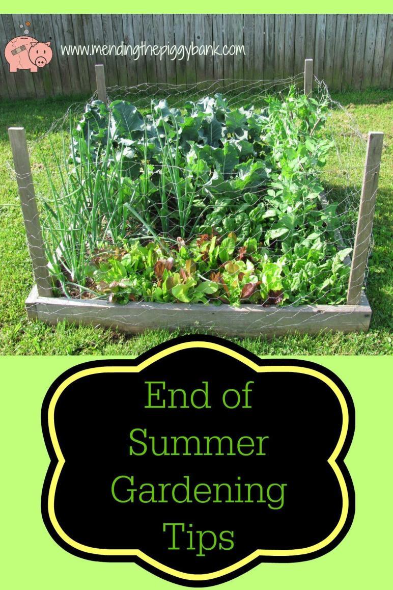 End Summer Gardening Tips Mending Piggy Bank