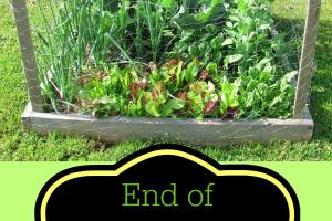 End Summer Gardening Tips Mending Piggy Bank