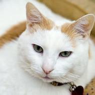 Famed Fat Cat Still Living Eating Like King