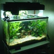 Fish Tank Ecosystem Top Suggestions Aquaponics