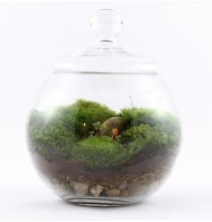 Food Creativity Diy Terrariums Potted