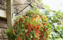 Fruits Vegetables Can Grow Hanging Baskets