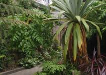 Garden Ideas Tropical Plants Traditional Gardens Tended