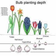 Gardening Ideas Completegarden Weblog