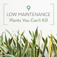 Glomorous Low Maintenance Plants Infographic