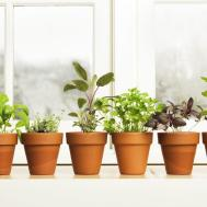Grow Herbs Spices Indoors Clickhowto